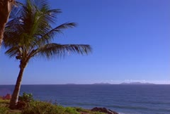 Beach with palmtree Stock Footage