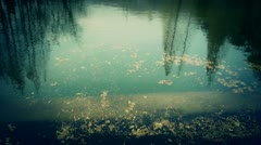 Forest reflection in water,metasequoia leave floating on lake,ripple,fir. Stock Footage