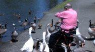 Ducks 57 Stock Footage