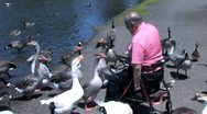 Ducks 58 Stock Footage