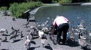Ducks 69 Stock Footage