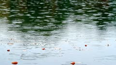 Raindrops falling onto autumn leaves in a pond. Stock Footage