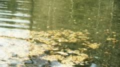 Metasequoia leaves floating on Sparkling lake,powder,debris. Stock Footage