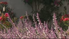 Hummingbirds in Mexico Stock Footage