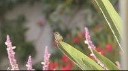 Hummingbird Stock Footage