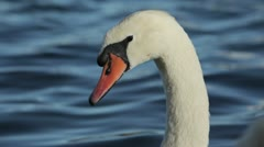 Closeup of a white swan Stock Footage