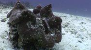 Underwater Venus Fly Trap Stock Footage