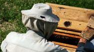Beekeeper At Work V3 Stock Footage