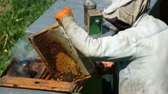 Beekeeper At Work V1 Stock Footage