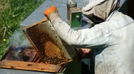 Stock Video Footage of Beekeeper At Work V1