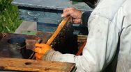 Beekeeper At Work V4 Stock Footage
