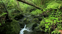 Lush Stream in Jungle - stock footage