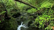 Lush Stream in Jungle Stock Footage