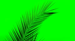 Palm Leaf Green Background - stock footage