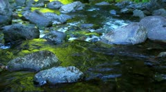 Water Flowing in Stream Stock Footage