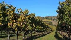 Autumn Vineyard Stock Footage