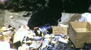 Bear Scavenges in Trash Garbage National Park 1960s Vintage Film Home Movie 1836 Stock Footage