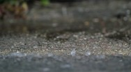 Stock Video Footage of rain dripping on the pavement. macro