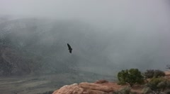 California condor flying along cliff ledge Stock Footage