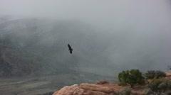 California condor flying along cliff ledge Stock Footage