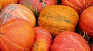 Lot of autumn pumpkin scattered on dry grass Stock Footage
