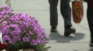 Purple flowers along the sidewalk (2 of 2) Stock Footage