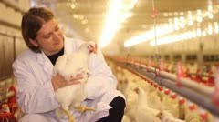 Veterinarian working on chicken farm Stock Footage