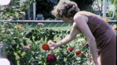 Young Woman Picks Flower Rose Garden 1950s Vintage Film Home Movie 1891 - stock footage