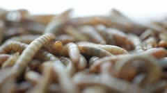 Larva Stock Footage