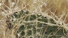 Cactus Spines closeup Stock Footage