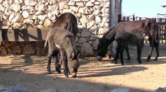 Four donkeys on the farm - stock footage