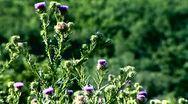 Flower Stock Footage