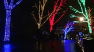 Stock Video Footage of Zoo Lights - Washington - Eerie tree lighting at the Zoo, night, rain