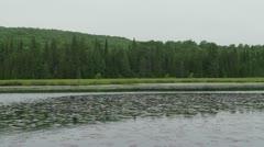 Algonquin Provincial Park pan 1 Stock Footage