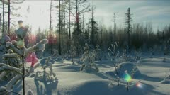 Sun through the forest Stock Footage