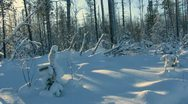 Stock Video Footage of winter forest.