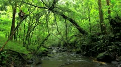 Lush river in jungle Stock Footage