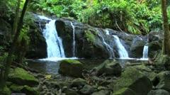 Lush stream in jungle Stock Footage