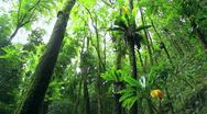 Jungle rainforest Stock Footage