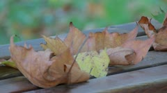 Dry Leaves In Autumn Stock Footage