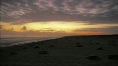 Arribada on the beach Stock Footage
