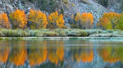 Stock Video Footage of fall colors, vibrant aspen reflecting in lake