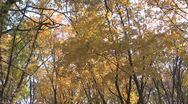 Autumn Stock Footage