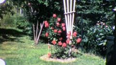 Flower Rose Garden Circa 1955 (Vintage Film Home Movie Footage) 1965 Stock Footage