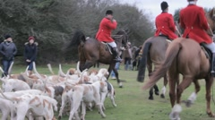 Hunting hounds and riders Stock Footage