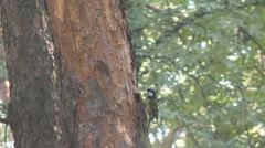 Bird Titmouse Stock Footage