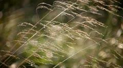 Beautiful texture of autumn grass Stock Footage
