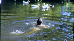 Little Girl in Swimming Ducks Summertime Fun 1960s Vintage Film Home Movie 1980 Stock Footage