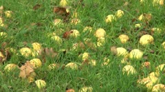 Windfall Crab Apples Stock Footage