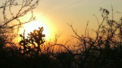 Vegetation of Sierra Mexico and Sunset - stock footage
